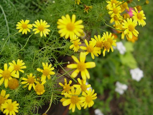 Smallflowers