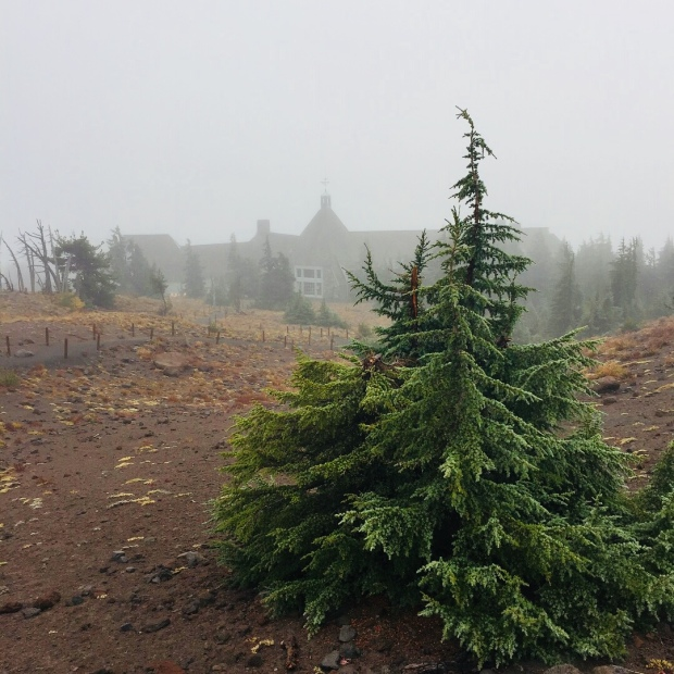 View form behind of the Timberline Lodge on a drizzly afternoon. Photo by Stacey Van Landingham