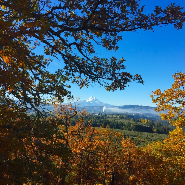 Snowcapped Mt. Hood from panoramic viewpoint in Hood River, Oregon. Photo by Stacey Van Landingham.